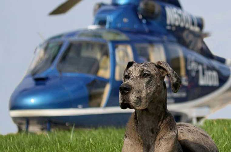 A pet therapy dog sits in the grass in front of a helicopter