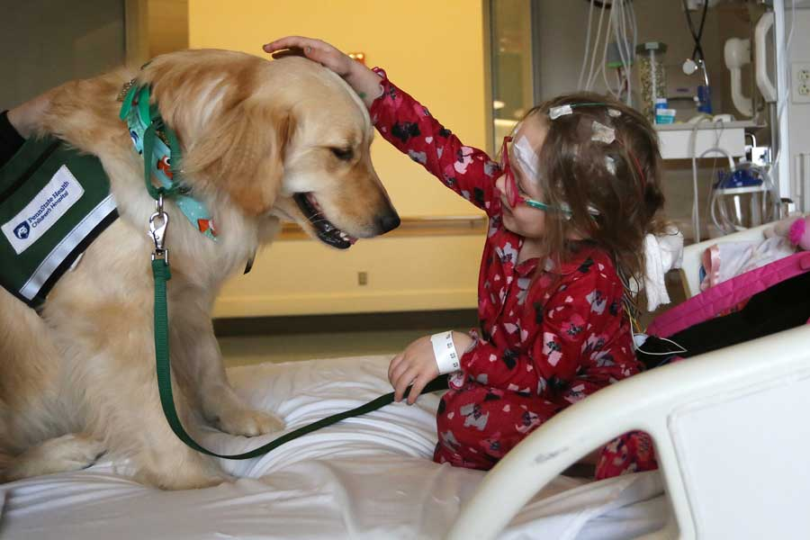 Young pediatric patient sitting on hospital bed petting facility dog.